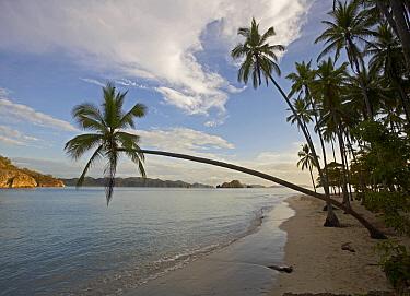 Palms growing on beach, Tortuga Island, Costa Rica  -  Tim Fitzharris