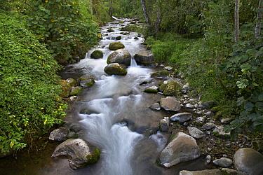 Savegre River flowing through forest, Costa Rica  -  Tim Fitzharris