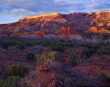 Vegetation and sandstone buttes, Palo Duro Canyon State Park, Texas  -  Tim Fitzharris