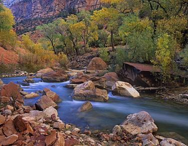 Virgin River flowing through canyon in autumn, Zion National Park, Utah  -  Tim Fitzharris