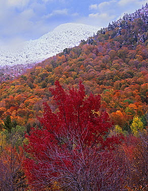 Forest in fall colors, Green Mountain National Forest, Vermont  -  Tim Fitzharris