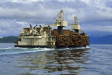Sitka Spruce (Picea sitchensis) and Hemlock logs carried on barge, Queen Charlotte Islands, British Columbia, Canada  -  Thomas Mangelsen