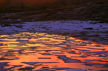 Melting ice reflecting midnight sunset, Wager Bay, Manitoba, Canada  -  Thomas Mangelsen