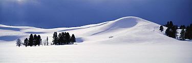 Hayden Valley in late winter, Yellowstone National Park, Wyoming  -  Thomas Mangelsen
