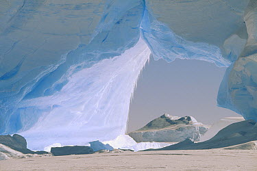 Icebergs caught in frozen ice shelf, Weddell Sea, Antarctica  -  Konrad Wothe