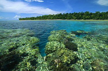 Coral reef in lagoon surrounded by white sand beaches and palm trees, Rani Island, Irian Jaya, Indonesia