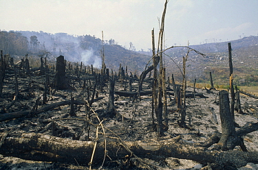 Slash and burn rainforest destruction, Madagascar