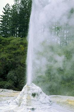 Lady Knox Geyser erupting, Waiotapu Thermal Wonderland, North Island, New Zealand  -  Konrad Wothe