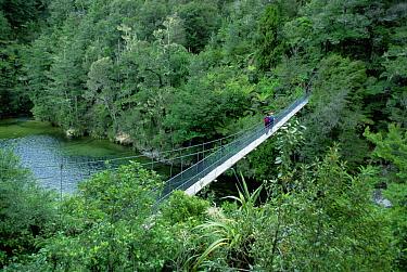 Hiker crossing suspension bridge, Abel Tasman National Park, South Island, New Zealand  -  Konrad Wothe