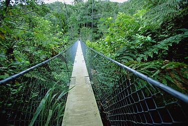 Suspension bridge in Abel Tasman National Park, South Island, New Zealand  -  Konrad Wothe
