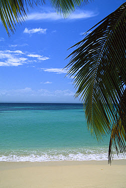 Palm fronds frame Bacardi Beach and lagoon, Cayo Levantado, Dominican Republic, Caribbean  -  Konrad Wothe