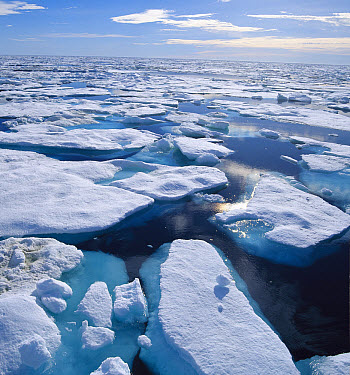 Ice floes in arctic, Northwest Territories, Canada  -  Konrad Wothe