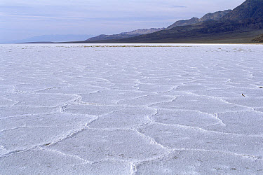 Salt flats at Badwater with polygon shapes, Death Valley National Park, California  -  Konrad Wothe