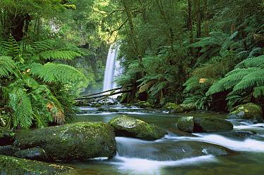 Hopetoun Falls on the Aire River flowing through rainforest, Otway National Park, Victoria, Australia  -  Konrad Wothe