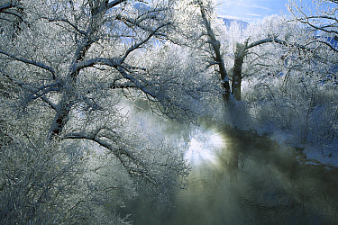 Sunlight illuminating mist and frost Loisach River, Upper Bavaria, Germany  -  Konrad Wothe
