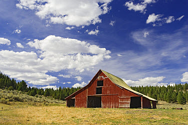 Old red barn in pastoral landscape, Oregon  -  Konrad Wothe