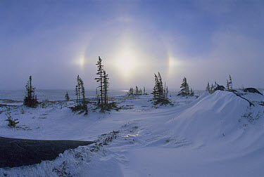Spruce forest in snow with sundogs, Hudson Bay, Canada  -  Konrad Wothe