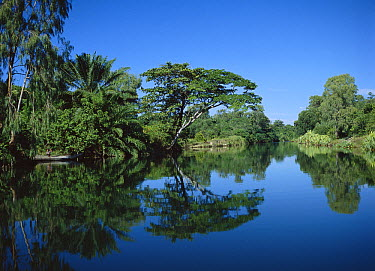 Rainforest trees reflecting in Pangalanes Canal, eastern Madagascar  -  Konrad Wothe