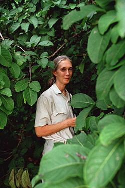 Jane Goodall portrait, Gombe Stream National Park, Tanzania  -  Gerry Ellis