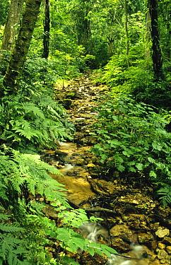 Gombe stream flowing through dense low montane tropical rainforest inside Gombe Stream National Park, Tanzania  -  Gerry Ellis