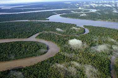 Aerial view of gulf coast region showing lowland tropical rainforest and winding rivers, Kikori Delta, Papua New Guinea  -  Gerry Ellis