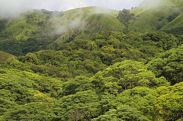 Mist atop hillsides covered in low montane tropical rainforest inside, Gombe Stream National Park, Tanzania  -  Gerry Ellis