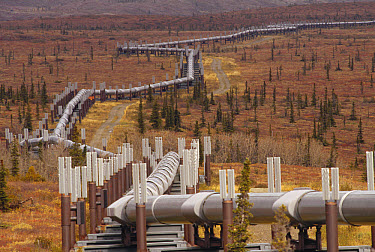 Oil pipeline crossing taiga, Alaska  -  Gerry Ellis