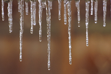 Single strand of icicles melting, North America