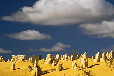 Pinnacle formations in Nambung National Park, Western Australia  -  Gerry Ellis