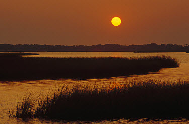 Salt marshes at sunset, Assateague Island National Seashore, Maryland  -  Gerry Ellis