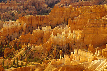 Hoodoos formations from Sunrise Point, Bryce Canyon National Park, Utah  -  Gerry Ellis