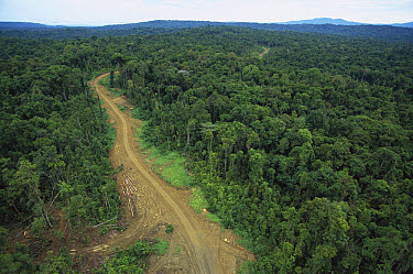 Logging road in lowland tropical rainforest across the broad flood plain of Aird River, Kikori Basin, Papua New Guinea  -  Gerry Ellis