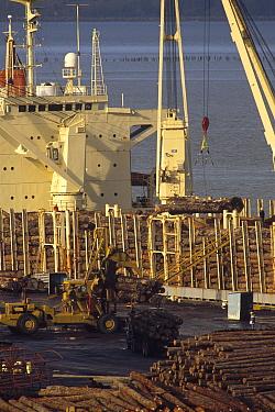 Raw log export to Japan, Port of Astoria, Oregon  -  Gerry Ellis