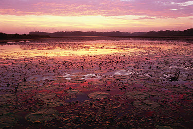 Sunrise over the Pongolo Flood Plain on the Banzi Pan, Ndumo Game Reserve, South Africa  -  Gerry Ellis