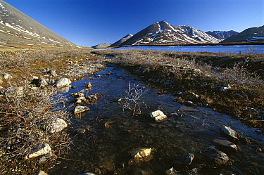 Stream running over tundra, Arctic National Wildlife Refuge, Alaska  -  Gerry Ellis