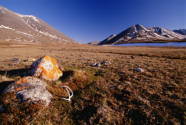 Rocks and peaks on tundra, Arctic National Wildlife Refuge, Alaska  -  Gerry Ellis