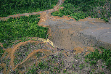 Rainforest logging activities near eastern boundary of the Kikori Delta, Papua New Guinea  -  Gerry Ellis