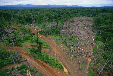 Logging road and erosion in lowland tropical rainforest east of Aird River Delta, Kikori Basin, Papua New Guinea  -  Gerry Ellis