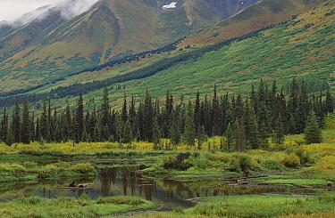 Taiga vegetation and pond, Chugach National Forest, Alaska
