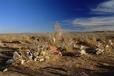 Garbage dumped in desert near Fernandez Leal, State of Chihuahua, Mexico  -  Gerry Ellis