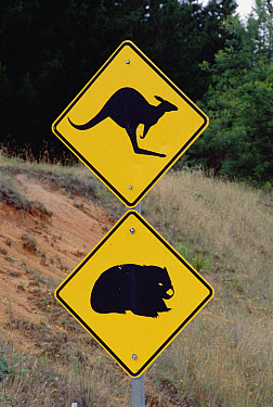 Wildlife caution road signs in the foothills of the Great Dividing Range, New South Wales, South Australia  -  Gerry Ellis