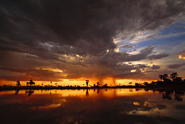 Sunset and storm clouds over waterhole, Kwando River flood plain, Linyanti Swamp, Okavango Delta, Botswana  -  Gerry Ellis
