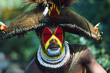Huli tribesman in traditional costume, Tagali River Valley, Papua New Guinea  -  Gerry Ellis
