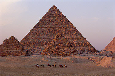 The pyramids of Giza in evening light, Giza, Egypt  -  Gerry Ellis