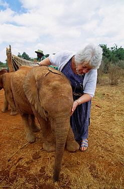 African Elephant (Loxodonta africana) orphan with conservationist Daphne Sheldrick, David Sheldrick Wildlife Trust, Nairobi Park, Kenya  -  Gerry Ellis