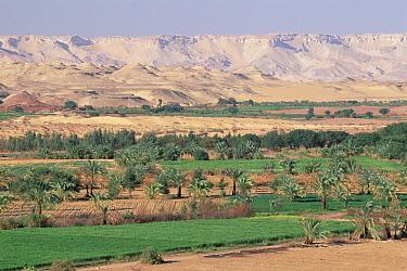 Farm land in Oasis Dakhia at foot of western desert escarpment, Sahara Desert, Egypt  -  Gerry Ellis