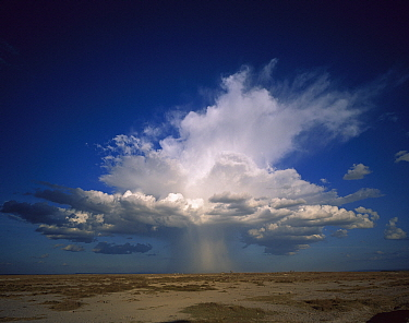 Altocumulus thunder head dumping rain on pan, Amboseli National Park, Kenya