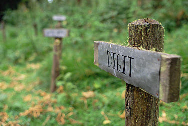 Digit's grave marker in Hagenia forest behind Karisoke Research Center, Parc National Des Volcans, Rwanda  -  Gerry Ellis