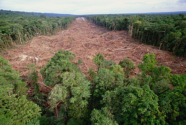 Clearing of tropical rainforest south of Lake Kutubu for Gobe oil camp, Papua New Guinea