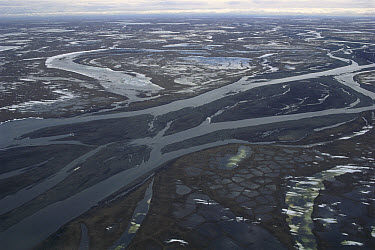 Braided river channels and gravel bars of the Canning River, 1002 Area, Arctic National Wildlife Refuge, Alaska  -  Gerry Ellis